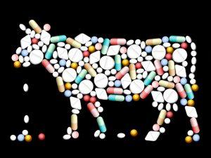 Viandes et antibiotiques